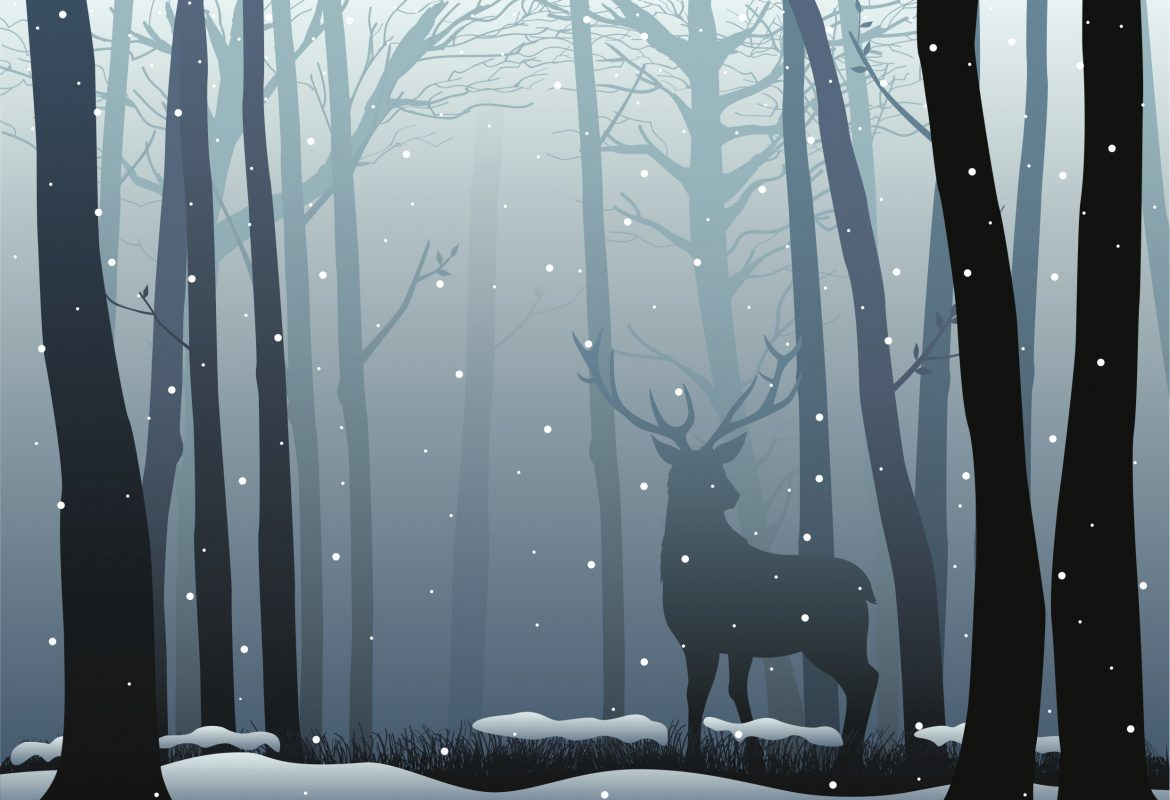 Reindeer in woods