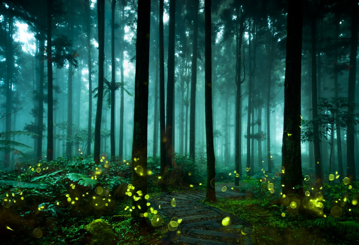 Fireflies lighting up the forest